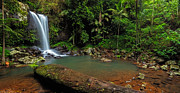 Tamborine Photos - Curtis Falls - Mt Tamborine by Mark Lucey