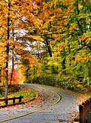 Fall Leaves Photos - Curve in the Road by Kristin Elmquist