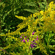 Curves Of Goldenrod Print by Judi Bagwell