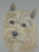 Custom Pet Portrait Pastels Acrylic Prints - Custom   Pet Portrait  ARTIST Acrylic Print by Nancy  Custin
