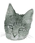Custom Pet Drawing Prints - Custom Pet Portrait-Huge Print by Megan Johnson