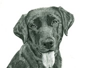 Charcoal Dog Drawing Drawings Posters - Custom Pet Portrait-Medium Poster by Megan Johnson