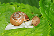 Lifestyle Digital Art Prints - Cute baby boy with a snail shell Print by Jaroslaw Grudzinski