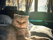 Pillow Photos - Cute Cat by Jimmy LL Tsang