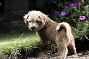 Tiny Dogs Photos - Cute Dog by Benjamin Langford