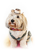 Sitting Photo Posters - Cute dog in Halloween cowboy costume Poster by Elena Elisseeva