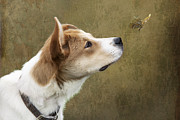 Sniffing Prints - Cute Dog with Butterfly Print by Ethiriel  Photography