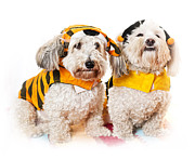 Two Dogs Prints - Cute dogs in Halloween costumes Print by Elena Elisseeva