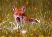 Fox Digital Art - Cute Fox Cub by Graham Prentice