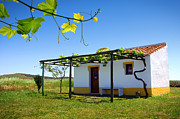 Vineyard Landscape Prints - Cute House Print by Carlos Caetano