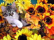Kitteh Prints - Cute Kitty Cat Kitten Lounging in a Flower Basket with Paw Outstretched - Fall Season Print by Chantal PhotoPix