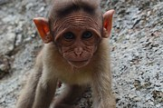 Siddarth Rai - Cute Monkey