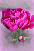 Cute Mixed Media Metal Prints - Cute  Peony Metal Print by Heinz Mielke