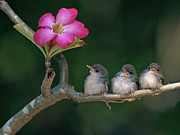 Pink Flower Prints - Cute Small Birds Print by Photowork by Sijanto