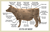 Labelled Prints - Cuts Of Beef Print by Take 27 Ltd