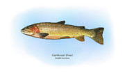 Trout Drawings - Cutthroat Trout by Ralph Martens
