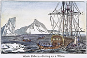 Fishery Prints - CUTTING UP A WHALE, c1840 Print by Granger