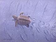 Baby Sea Turtle Paintings - Cycle of Life - 1 by Michael Allen