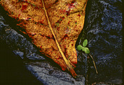 Brown Leaf Prints - Cycle of Life Print by Paul Wear