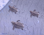 Baby Sea Turtle Paintings - Cycle of Life Three by Michael Allen