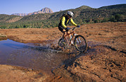 Male Athletes Posters - Cyclist Going Through Puddle, Arizona Poster by David Edwards