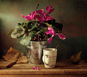 Cyclamen Photos - Cyclomen Flower Pot And Cup With Strips by Copyright Anna Nemoy(Xaomena)