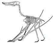Cycnorhamphus Suevicus Print by Science Source
