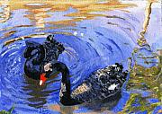 Lovely Pond Prints - Cygnus Atratus Print by Lynne Reichhart