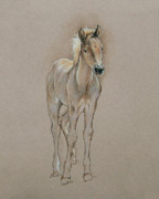Pony Drawings Originals - Cyndees Foal by Cindy Davis