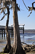 Cypress And Dock At Low Tide Print by Tiffney Heaning