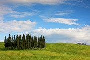 Italian Cypress Photo Posters - Cypress Poster by Eggers   Photography