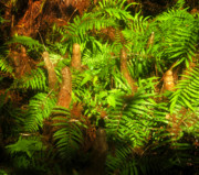 Cypress Knees Photos - Cypress knees in ferns by David Lee Thompson