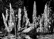 Cypress Knee Art - Cypress Knees by Lisa Scott