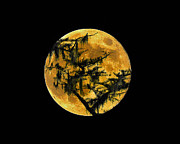 Luna Digital Art Prints - Cypress Moon Print by Al Powell Photography USA