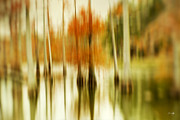 Lensbaby Photography Framed Prints - Cypress Morning Framed Print by Scott Pellegrin