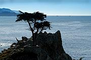 Huisken Prints - Cypress Point at Monterey Peninsula Print by Lyle  Huisken