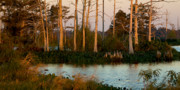 Gulf Of Mexico - Cypress Stand at Sunset Venice Louisiana by Paul Gaj