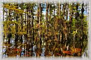 Bromeliads Glass - Cypress Strand Everglades by Jim Dohms