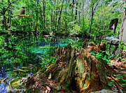 Florida Waterscape Originals - Cypress stump at Buford Spring by Barbara Bowen