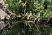 Knees Originals - Cypress Swamp  by Barbara Bowen
