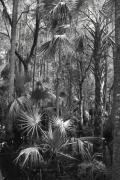 Florida Swamp Photos - Cypress Swamp Florida by Joseph G Holland