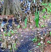 Cypress Swamp Land Print by Mindy Newman