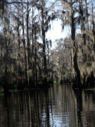 Cypress Swamps Framed Prints - Cypress Swamp Pass Framed Print by Joy Tudor