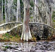 Patriots Prints - Cypress Swamp Stone Bridge Print by Elena Tudor