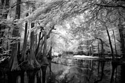 North Carolina Wall Art Prints - Cypress Swampland Print by Dan Carmichael