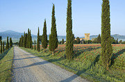Tuscan Road Prints - Cypress Trees and Poppy Field Print by Rob Tilley