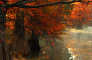 Red Leaves Photos - Cypress Trees in Red by Iris Greenwell