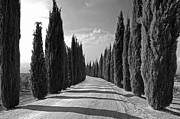 Dirt Road Posters - Cypress Trees Poster by Joana Kruse