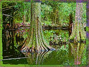 Mindy Newman Framed Prints - Cypress Trees Framed Print by Mindy Newman