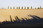 Tuscan Hills Prints - Cypress Trees on Hill Print by Jeremy Woodhouse